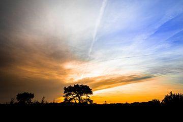 Baumsilhouette von Jeroen Mikkers