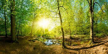Bos met beekje en zon van Günter Albers