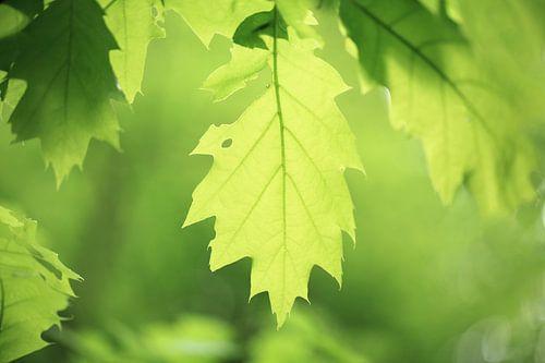 Fris groen loof aan de bomen in het voorjaar in het bos. Mooie lente kleuren ontspringen aan het beg