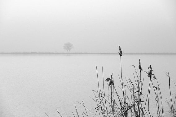 Melancholie van Arjen Roos