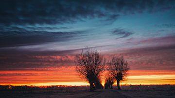 Bomenrij van Lex Schulte