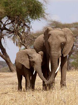 Elefanten im Tansania Nationalpark  von Roos Vogelzang