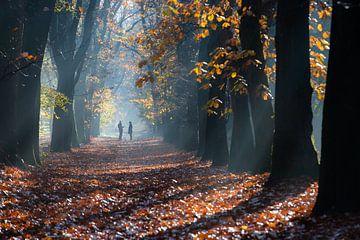 Spaziergang während eines nebligen Sonnenaufgangs im Wald von Zeister in Zeist! von Peter Haastrecht, van
