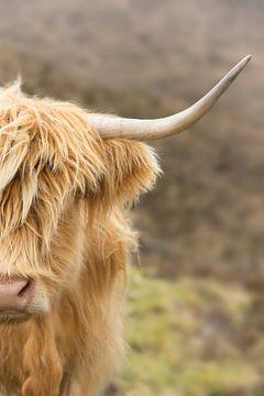Portrait eines schottischen Highlander von Marloes van Pareren