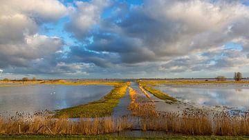 Hoogwater op de weilanden van Bram van Broekhoven