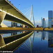 Rdam Foto Rotterdam profielfoto