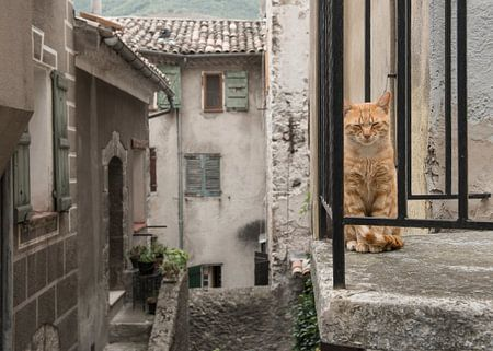 Balkon kat / Red cat sitting on a balcony seen through the bars in a old stre