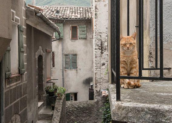 Balkon kat / Red cat sitting on a balcony seen through the bars in a old stre van Elles Rijsdijk