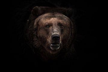 ein abgedunkeltes Bild, ein streng braunes, leicht verwirrendes Biest schaut mit kleinen Augen aus d von Michael Semenov