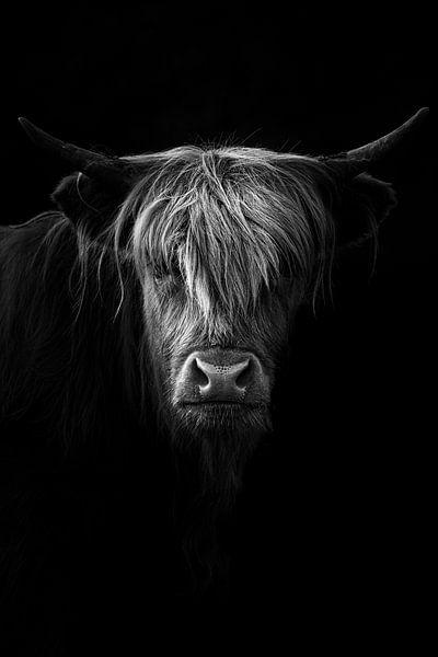 Schotse Hooglander in zwart, wit van Jacco van Son