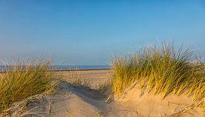 De zee achter de duinen