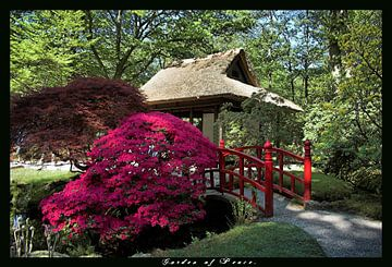 Japanese Garden van Rob Kuijper