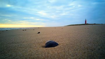 Kokkel op het strand van Wijnand Medendorp