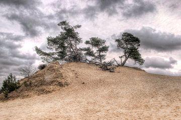 Kiefer auf Sand-Düne. von Fotografie Arthur van Leeuwen
