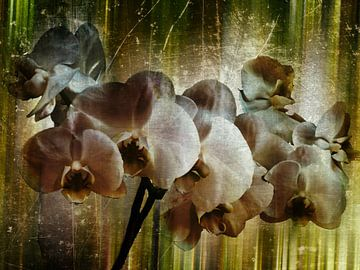 Orchidee van Christine Nöhmeier