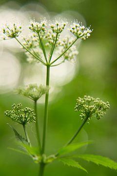Plant von Be-eR fotografeert