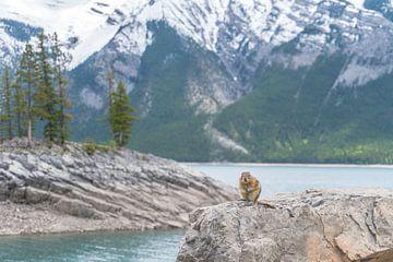 Eichhörnchen in einer Landschaft von Hege Knaven-van Dijke