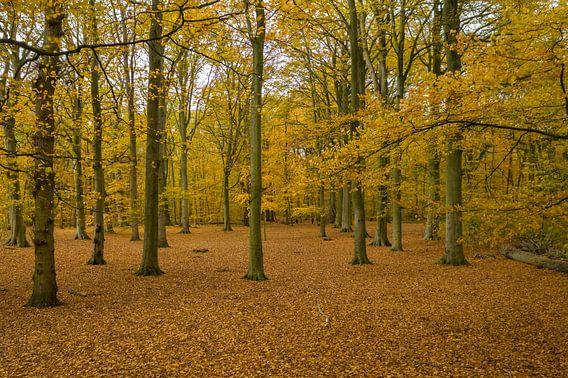 Nederlands bos in herfst kleuren