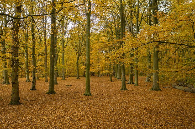 Nederlands bos in herfst kleuren van Menno Schaefer