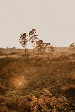 National Park De Loonse en Drunense Duinen van Amber den Oudsten