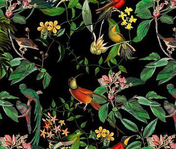 Im Paradies der Kolibries von Andrea Haase