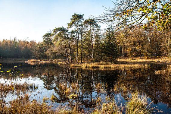 Herfst in het Bos  03 van Geertjan Plooijer