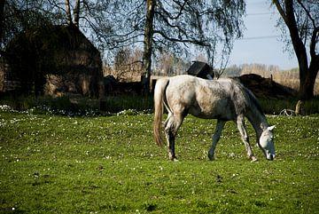 Paard in de wei (I) van Wesley McHollander