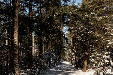 Een bospad vol met sneeuw van Tamara Geluk