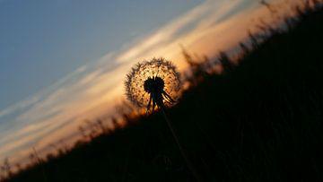 Dandelion season van R. Khoenie