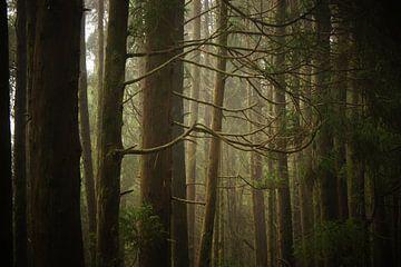 Forest von Pieter  Debie