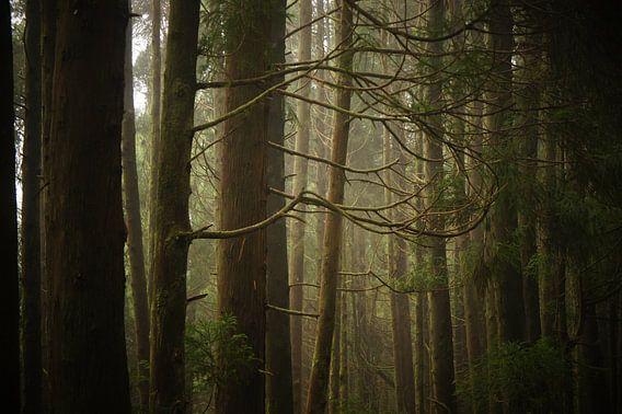 Forest van Pieter  Debie