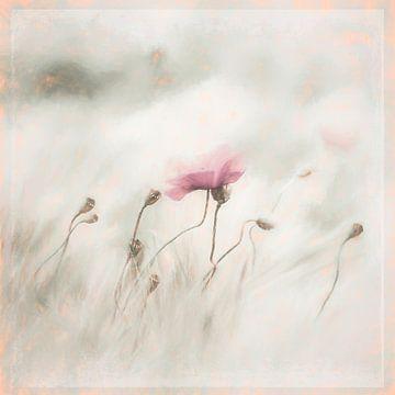 Mohnblume im Feld von Annette Hanl