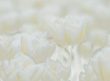 Tulpen von Sigrid Westerbaan