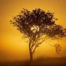 zon op komst op de heide van Rando Kromkamp