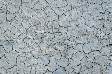 De sporen van droogte van WeLeaf (Zoë & Olivier)