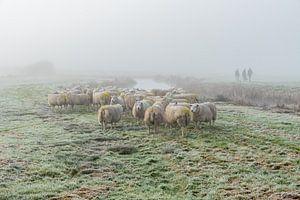 Schapen in de mist van Richard Janssen