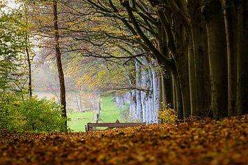 Herfst sur Jaap Terpstra