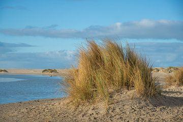 Duinvorming met helmgras aan de kust van Jan Fritz