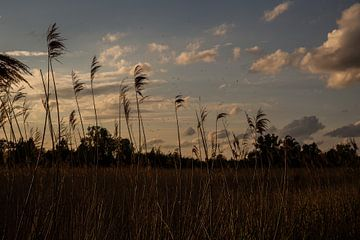 Sonnenuntergang Adlerpolder von kim brugman