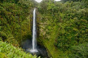 Akaka Falls - Jurassic Parc van Ellis Peeters