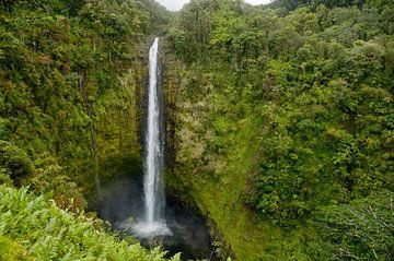 Akaka Falls - Jurassic Parc - Wasserfall von Ellis Peeters