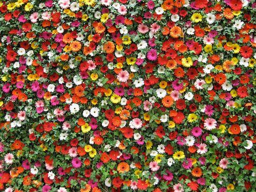 Duizend bloemen (A thousand flowers, Tausend Blumen, Mille fleurs)