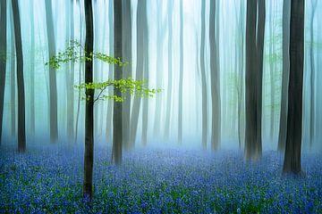 het blauwe bos ........, Piet Haaksma van 1x