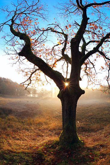 Tree heart van Olha Rohulya