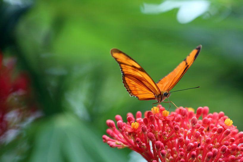 Vlinder von Jeroen Koppes