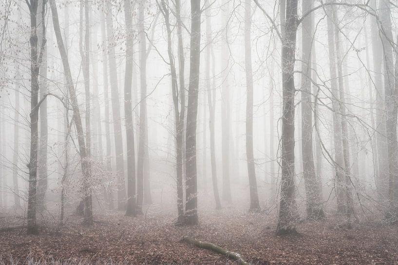 Mysterieus oud bos van Tobias Luxberg