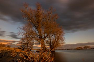 Boom in het avondlicht aan de rivier van Patrick Verhoef