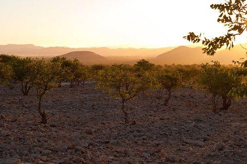 Evening light in Namibia van