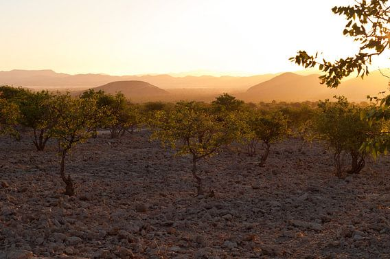 Evening light in Namibia