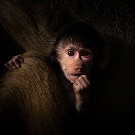 Me and my monkey van Niels Barto